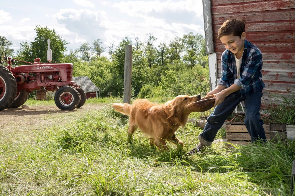A Dog Purpose Young Ethan Bryce With Puppy Bailey