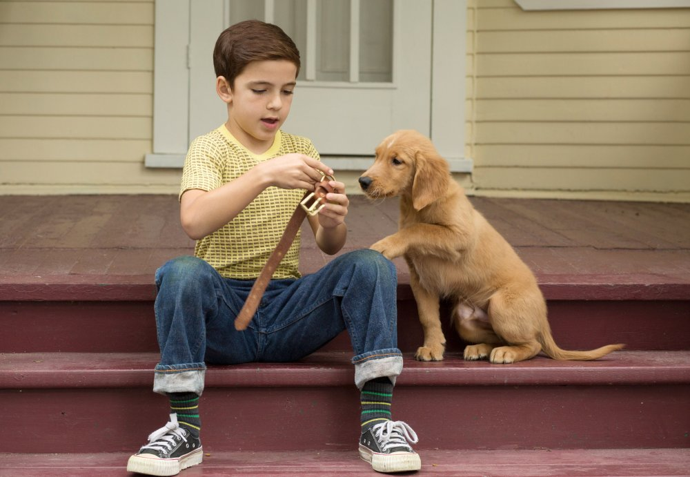 A DOG'S PURPOSE, BRYCE GHEISAR, 2017. PH: JOE LEDERER/© UNIVERSAL PICTURES