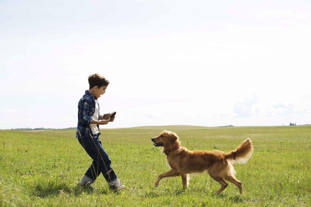 A Dog S Purpose Full Movie