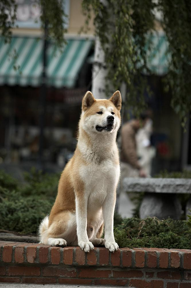 HACHIKO: A DOG'S STORY, 2009. ©Consolidated Pictures Group