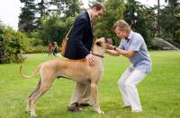 MARMADUKE, from left: Marmaduke (voice: Owen Wilson), Lee Pace, William H. Macy, 2010. ph: Joseph Lederer/TM and Copyright ©20th Century Fox Film Corp. All rights reserved.